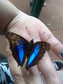 I was blessed by a butterfly. / Me bendijo una mariposa.